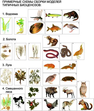 Типичные биоценозы