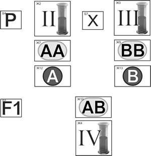 Генетика групп крови