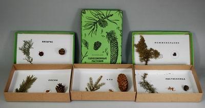 Коллекция «Голосеменные растения»