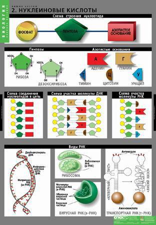 Химия клетки