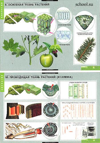 Растения - живой организм
