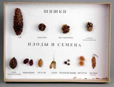 """Коллекция """"Шишки, семена плодов, деревьев и кустарников"""""""