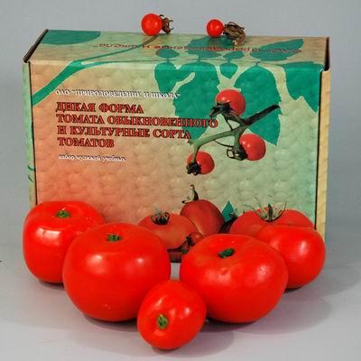 Муляжи Дикая форма и культурные сорта томатов