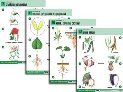 Ботаника 2