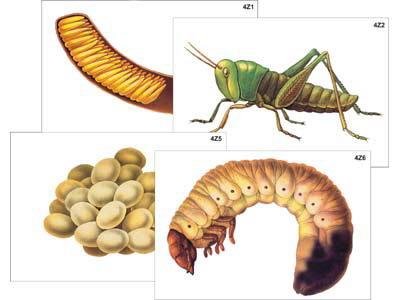 Развитие насекомых с полным и неполным превращением