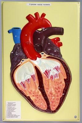 Барельефная модель Сердце